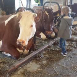 Koeien kijken Lovely Pictures   Week #9