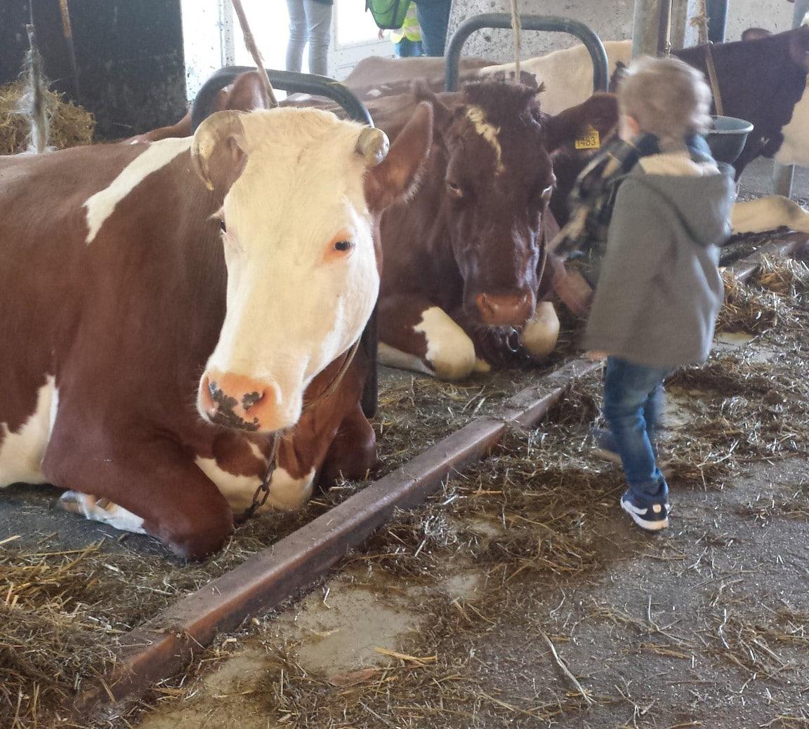 Koeien kijken Lovely Pictures | Week #9