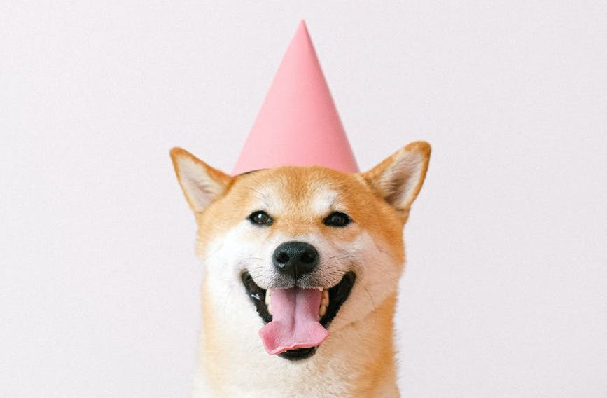 cute dog wearing a party hat